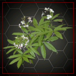 COMMOD_cardamine_mip0_ergebnis.png
